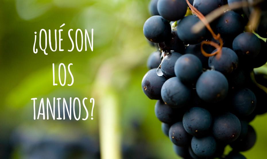 taninos del vino